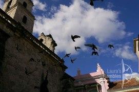 Lauras-Rambles-saint-francis-pigeons-Cuba