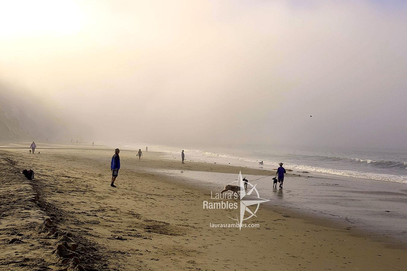 Santa Barbara, CA: Arroyo beach county park. Dogs Playing in morning mist.
