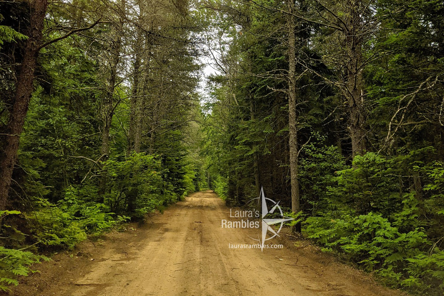 forested dirt road - road trip